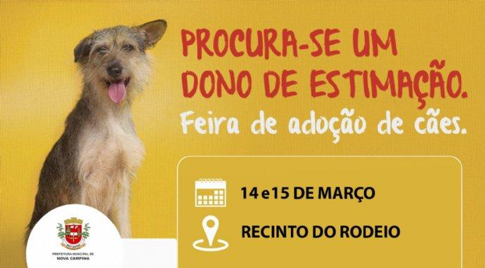 Prefeitura promove feira de adoção de cães